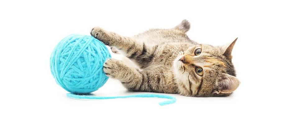 Photo d'un chat jouant avec une pelote de laine