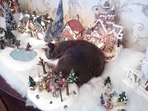 chat dans la crèche