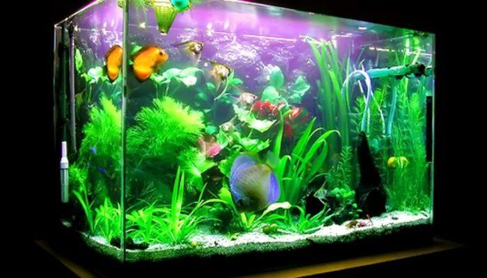 aquarium exotis