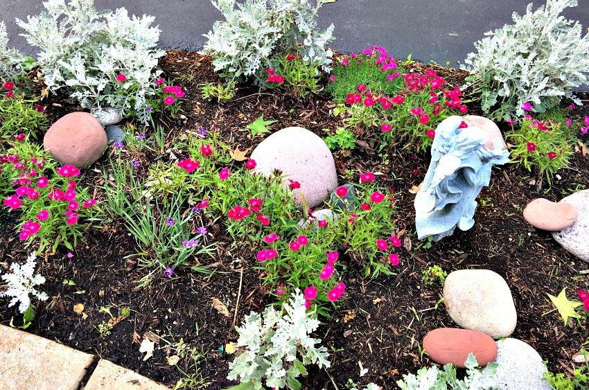Garden Tour Dianthas www.chathamhillonthelake.com
