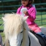 No Limits Horse Show