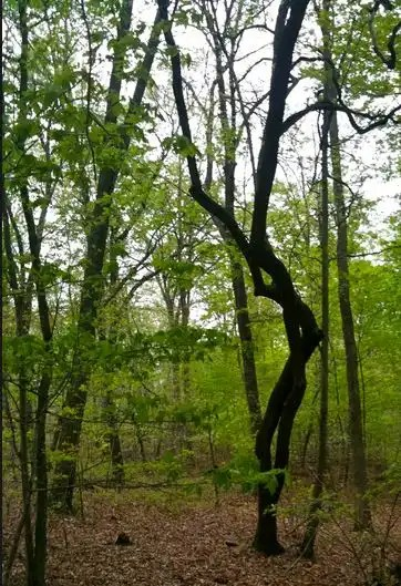 Pittsboro Southern Park