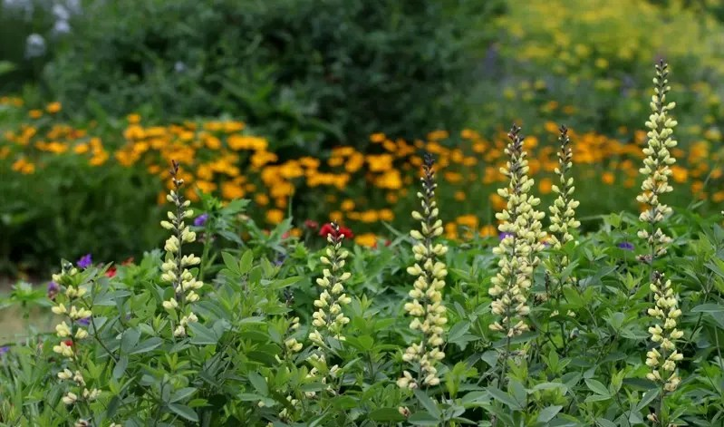 Check out virtual tours of Chatham County Extension's pollinator paradise garden