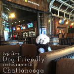Dog Friendly Restaurants in Chattanooga-Friday List