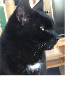 Eine Woche vor Weihnachten ausgezogen: Gizmo, mein Alter. 12 Jahre bei mir, möge er heimkommen.