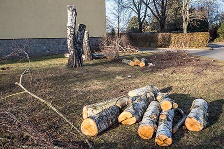 abattage et démontage d'arbres sur Rennes