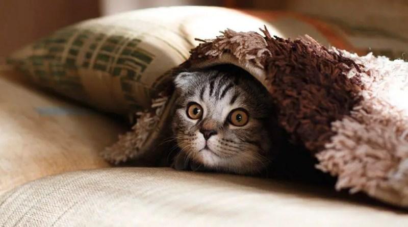 Encontre o Gato!