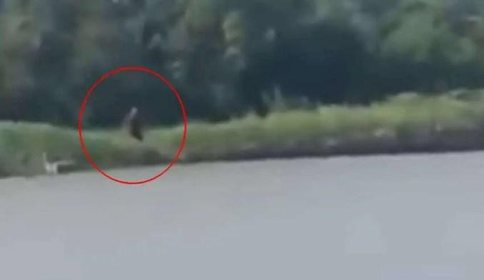 Criatura do Texas - Pescadores registram uma criatura 'meio humana e meio cão' em um rio no Texas
