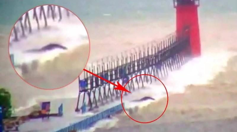 criatura do lago michigan - uma misteriosa criatura aparece no lago Michigan durante uma tempestade