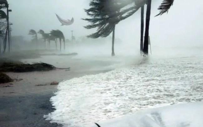 golfinho voador foi registrado nas Bahamas durante a passagem do furacão Dorian