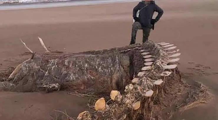 Um enorme e misterioso esqueleto aparece após uma tempestade em uma praia escocesa