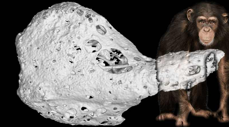 Um misterioso 'osso' é descoberto dentro dos corações de alguns chimpanzés