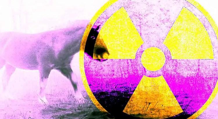 O enigma misterioso dos cavalos radioativos de chernobyl