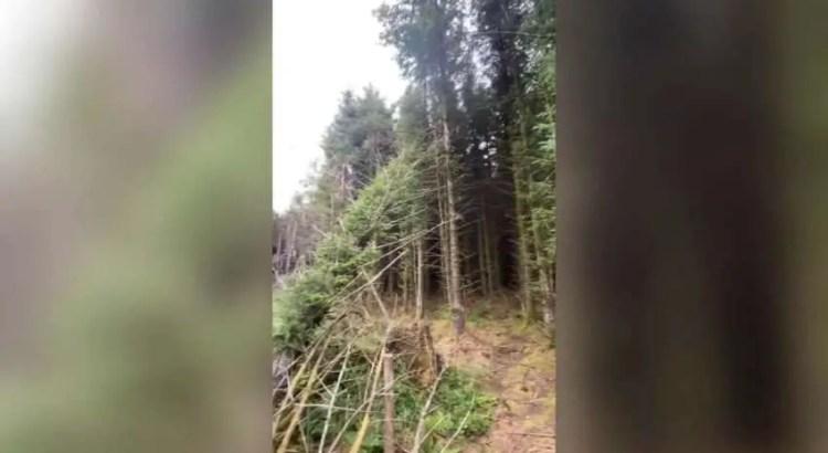 Um homem descobre o local de um OVNI acidentado em uma floresta do Reino Unido