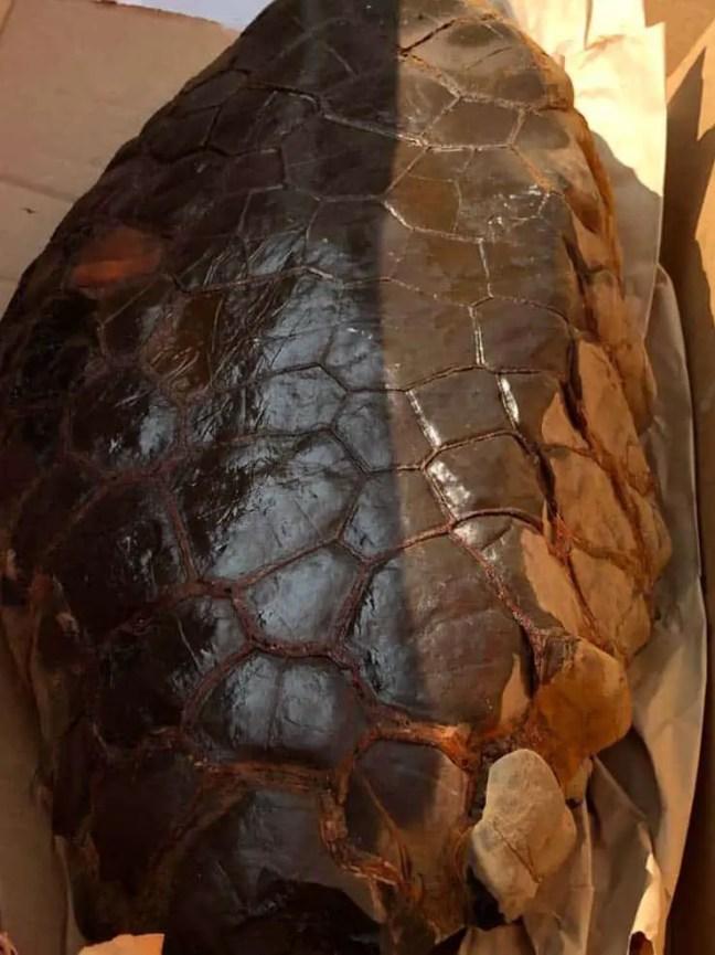 Ovo de réptil extraterrestre descoberto em Kentucky