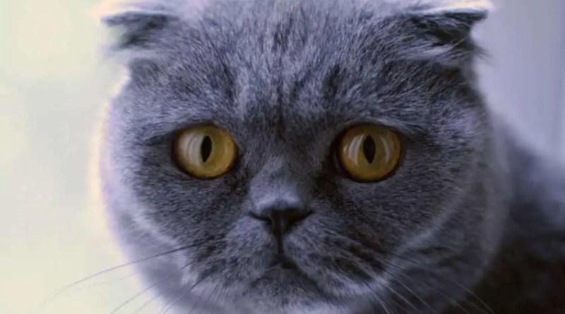 Venderam um gato por mais de 100.000 euros que faz milagres e realiza desejos