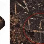 Espada anglo-saxônica de prata dourada gravada com uma suástica é leiloada