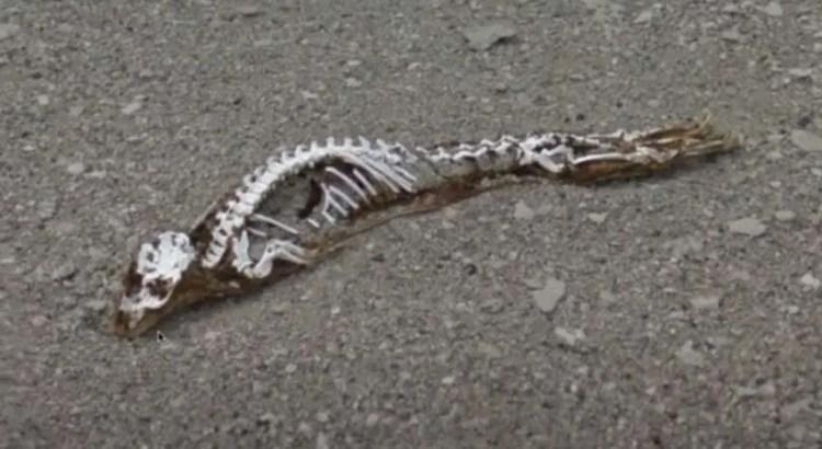 O degelo mostra na Antártica os restos mortais de uma criatura misteriosa que ninguém conseguiu identificar