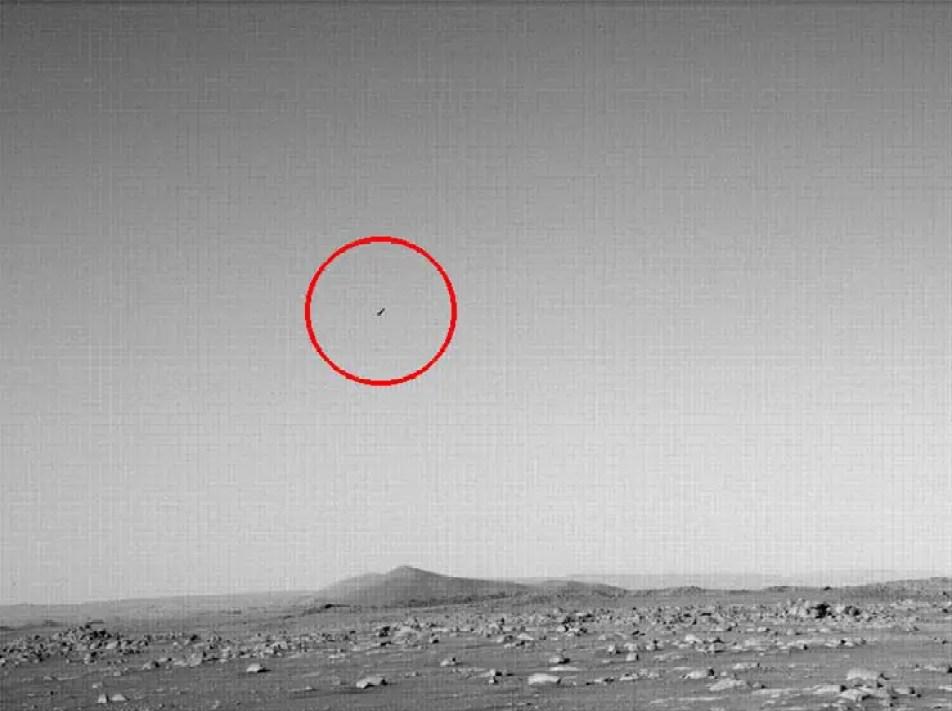 O pássaro marciano.