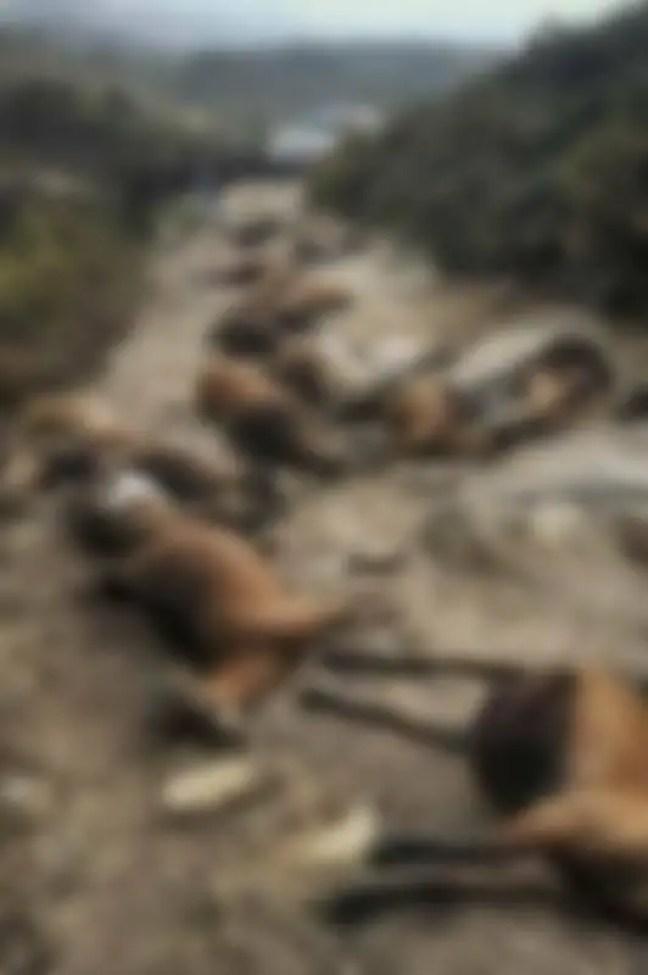 Um relâmpago em Arcos de Valdevez, Portugal, matou 68 cabras.