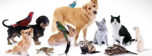O problema é que muito tempo o homem usa animais em experiências, ele vem buscando conhecimento científico e também para o benefício da nossa saúde.