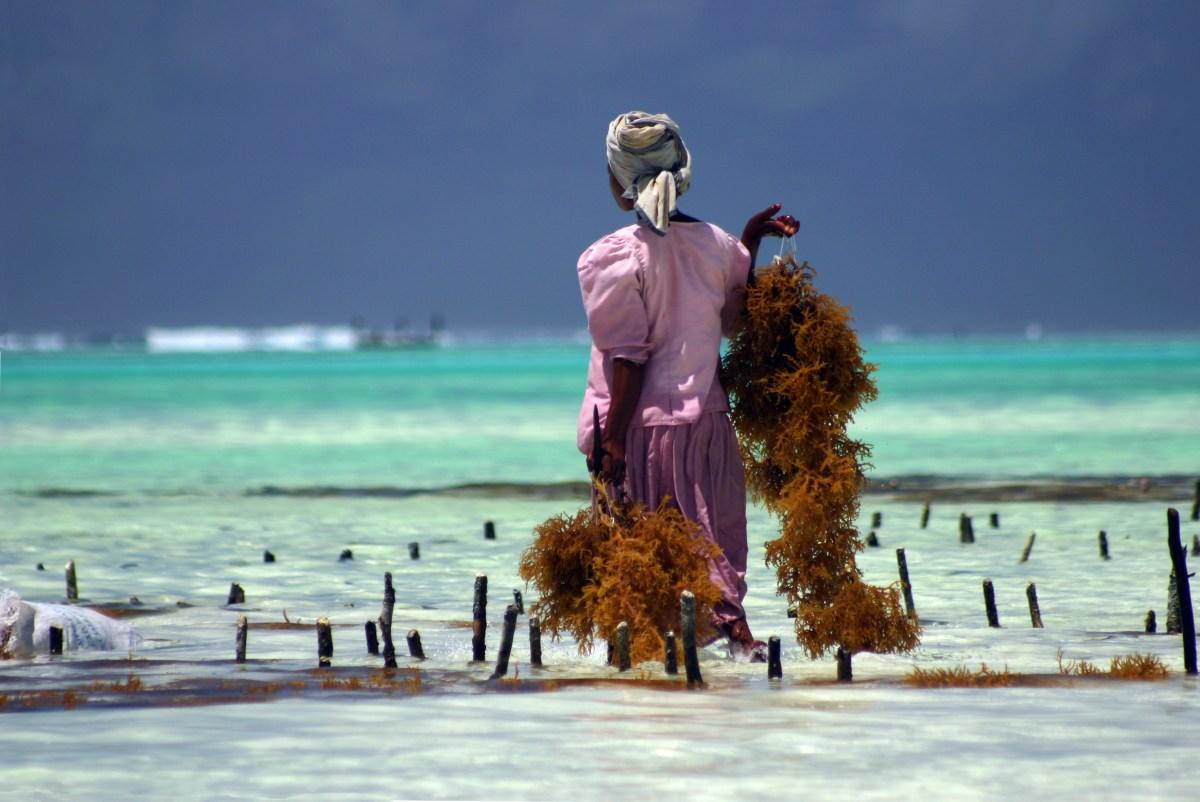 Kdy jet do Tanzánie a na ostrov Zanzibar