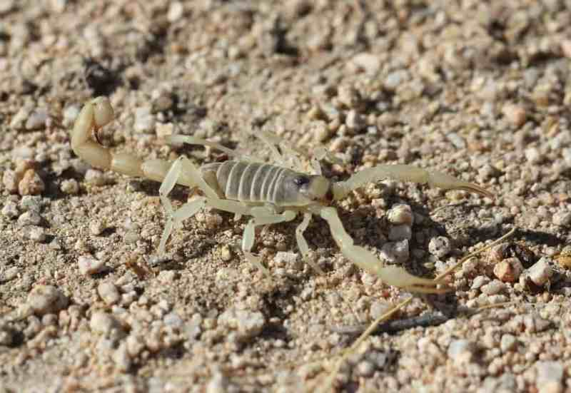 "Scorpions be like ""Can you see me now?"""