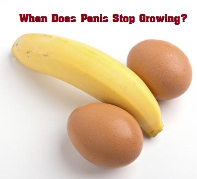 when does penis stop growing