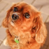 Dogs re-homed by Dog Adoption