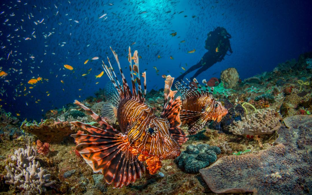 Visit Mozambique For Its Amazing Marine Wildlife & Rich Coral Reefs