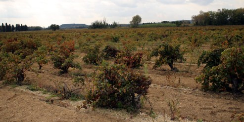 Sandy soil in Tavel