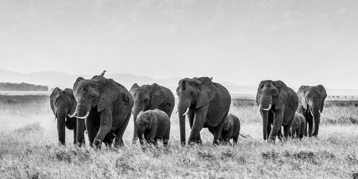 Why Kenya Needs To Conserve Its Wildlife, Flora and Landscapes