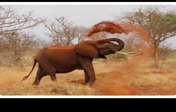 Human-Wildlife Conflict in Kenya