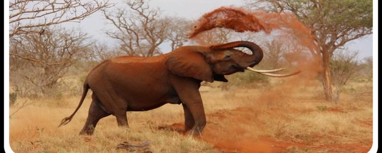 Human-Wildlife Conflict in Kenya (Demo)