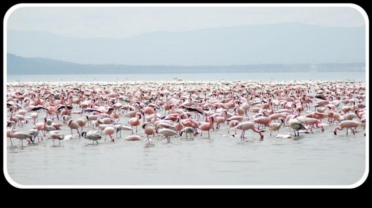 Let's Explore Nakuru town, Kenya