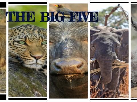 "THE ""BIG FIVE""_ Key African Wildlife Species found in Kenya"