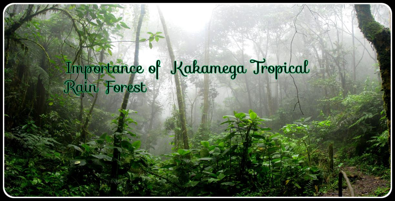 Importance of Kakamega Tropical Rain Forest