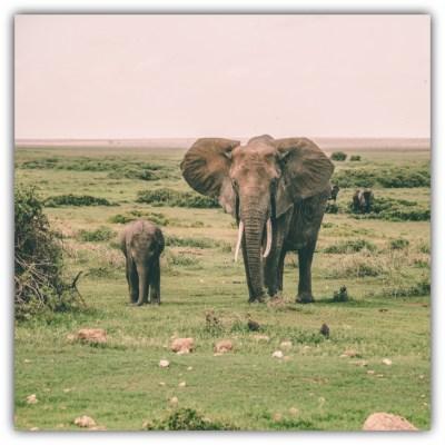 Its World's Elephant Day