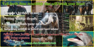 Evil deeds done to wildlife that will break your heart