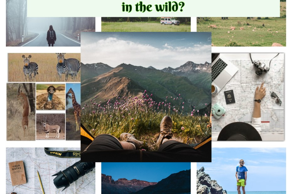What do you need to have unforgettable trip in the wild?