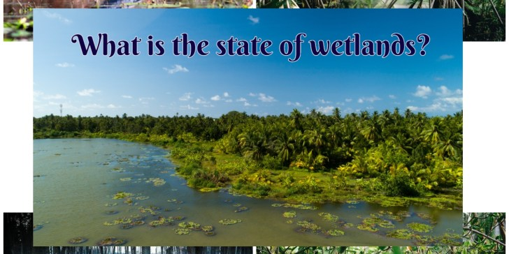 What is the state of wetlands?