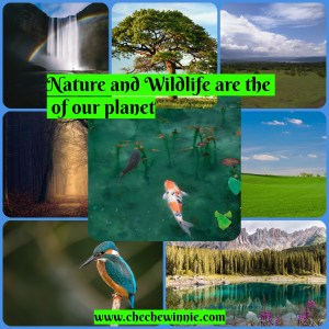 Nature and Wildlife are the beauty of our planet