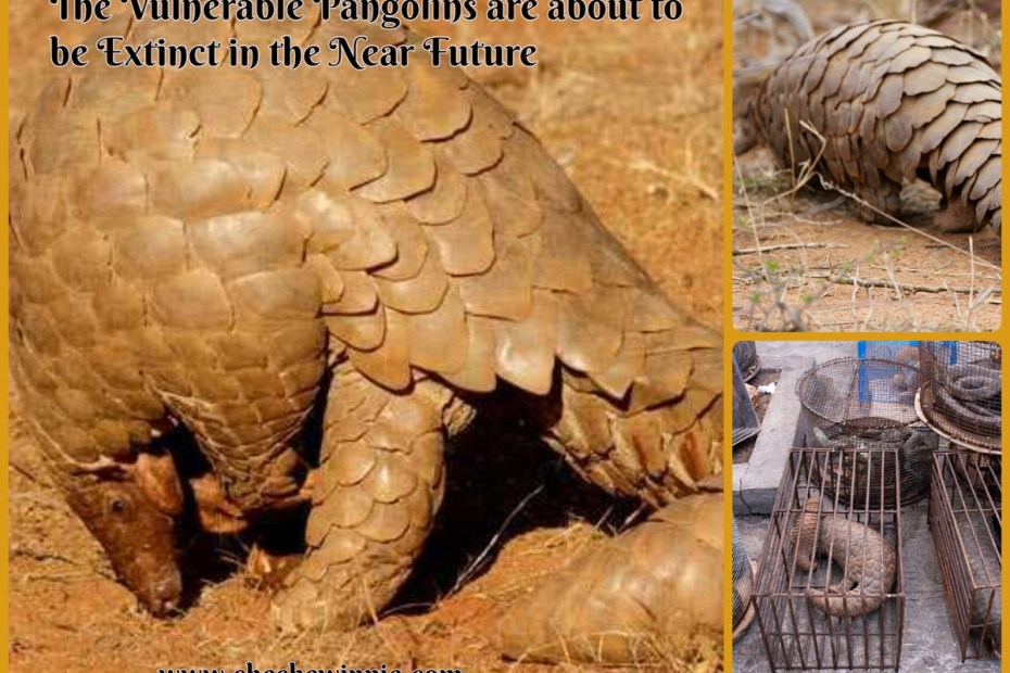 The Vulnerable Pangolins are about to be Extinct in the Near Future