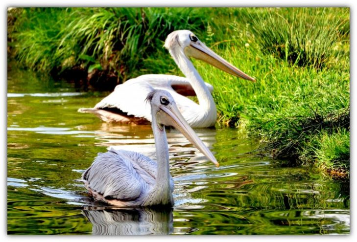 Valentine doesn't have to be expensive. Visit the nearby park and allow birds show you how to show love to your better half
