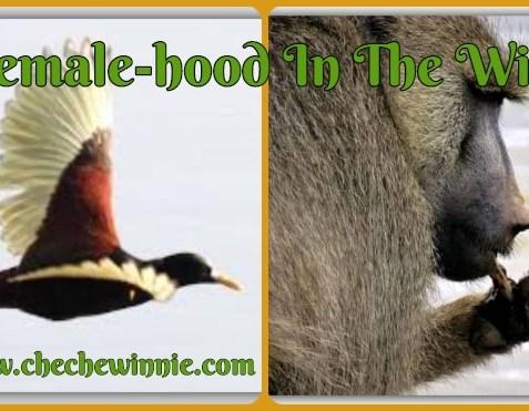 Female-hood In The Wild