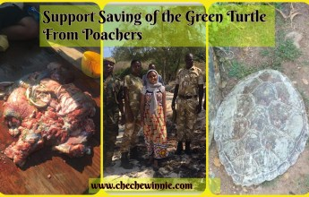 Support Saving of the Green Turtle From Poachers