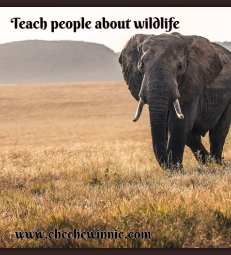 Teach people about wildlife