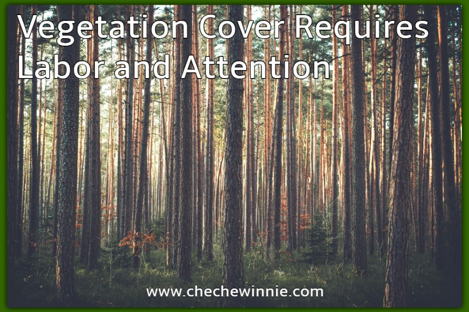 Vegetation Cover Requires Labor and Attention