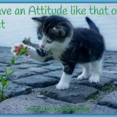 Have an Attitude like that of a Pet