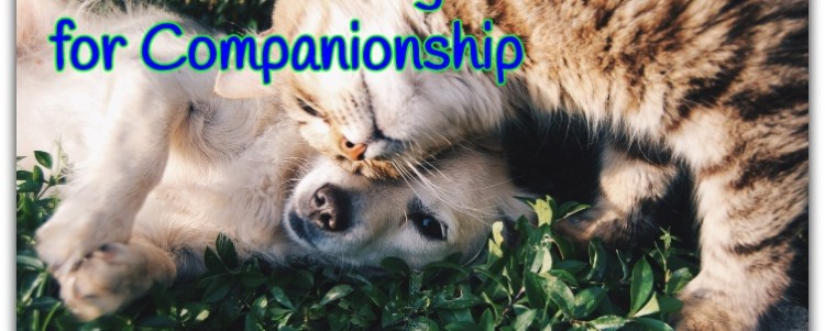 Pets for Luxury Versus Pets for Companionship